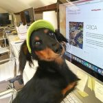 In honor of national dog day! Our office pup Elli[…]