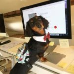 An office pup's work is never done. Wishing[…]