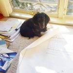 CBCA office pup Elliot is the man with the plan t[…]